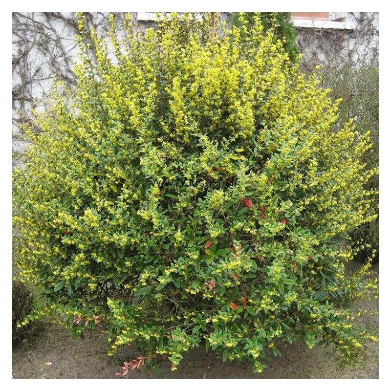 https://www.treecommerce.nl/messenger/photo.php?photo=014a2629564440cf2ab2486b915fed0c&tsd