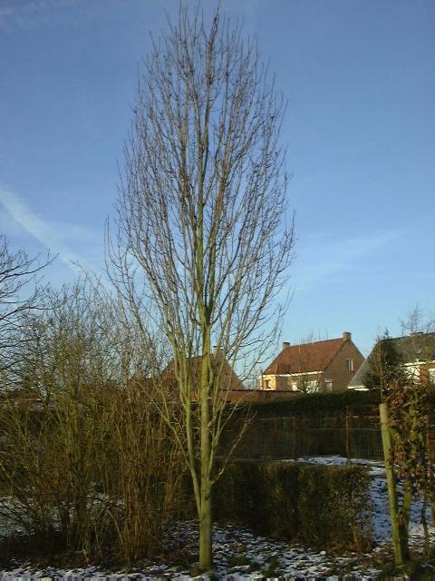 https://www.treecommerce.nl/messenger/photo.php?photo=0a2025a49962f3f870014409f260d694&tsd