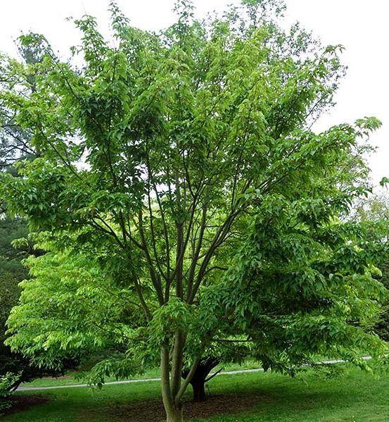 https://www.treecommerce.nl/messenger/photo.php?photo=22e6ec5bc5c8948773e6872776c1d58a&tsd