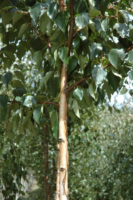 https://www.treecommerce.nl/messenger/photo.php?photo=24fa1c7984ae61fbda8406edc3804f88&tsd