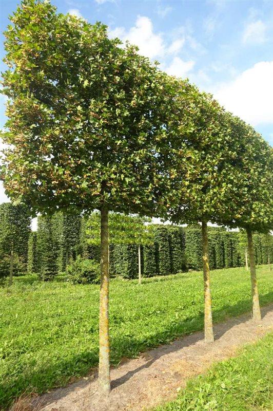 https://www.treecommerce.nl/messenger/photo.php?photo=294ff2853e51f8202f6eea43204055f3&tsd