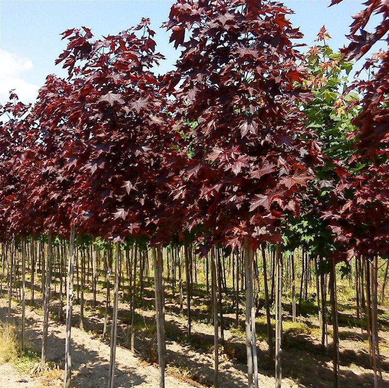 https://www.treecommerce.nl/messenger/photo.php?photo=2e9ba78a3efaf2fcf2b20b17a92bb94d&tsd