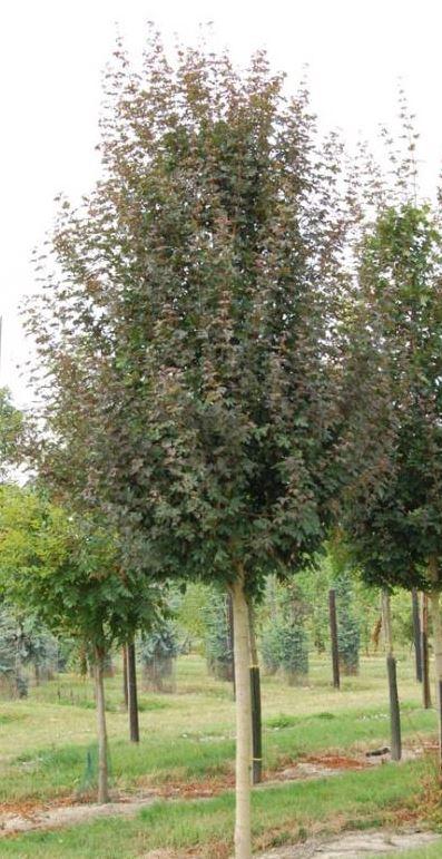 https://www.treecommerce.nl/messenger/photo.php?photo=3288fe394719cbf88d4c57855a7e6744&tsd