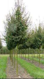 https://www.treecommerce.nl/messenger/photo.php?photo=369cacb887f7b956e490734318679115&tsd