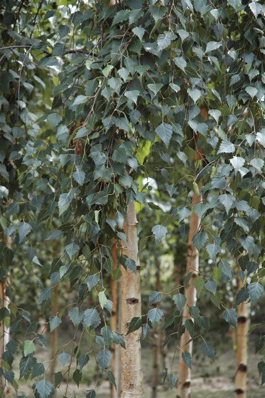 https://www.treecommerce.nl/messenger/photo.php?photo=4b79af1186a06e336fd44d4c58667ba4&tsd