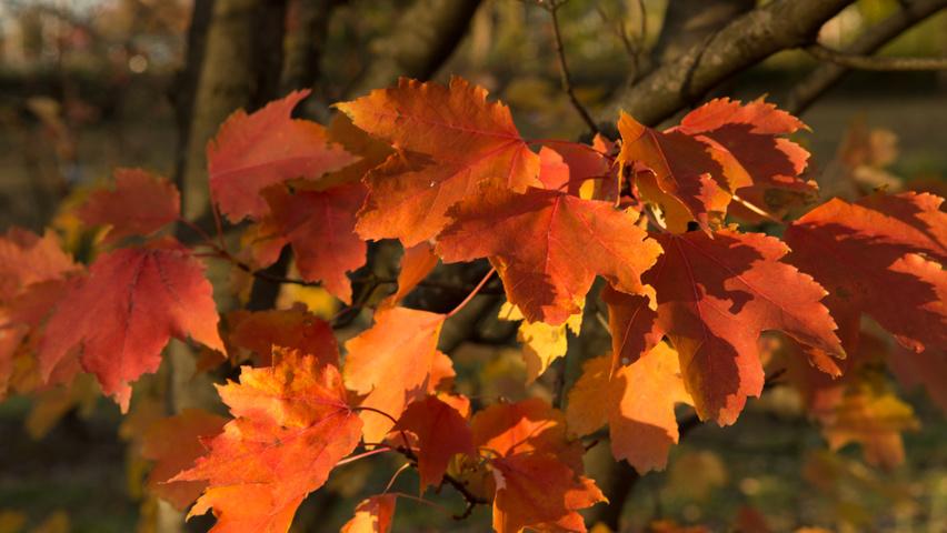 https://www.treecommerce.nl/messenger/photo.php?photo=4c11eecc516536c37bce52dae41396d7&tsd