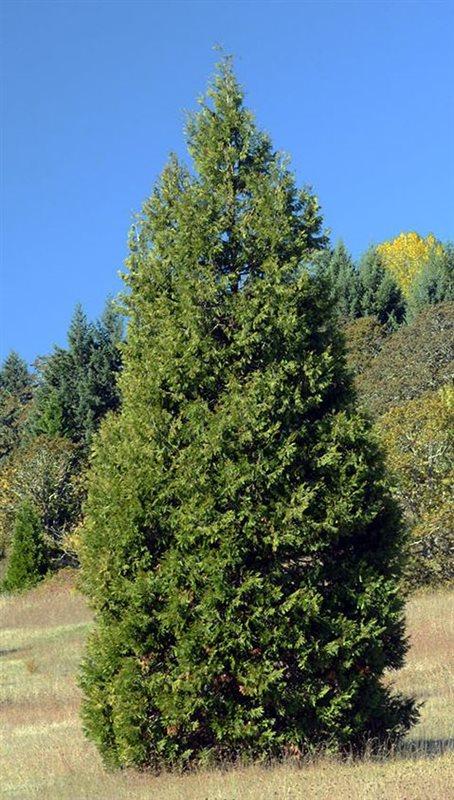 https://www.treecommerce.nl/messenger/photo.php?photo=4d5a86dadbda069ad33874f8637a5249&tsd