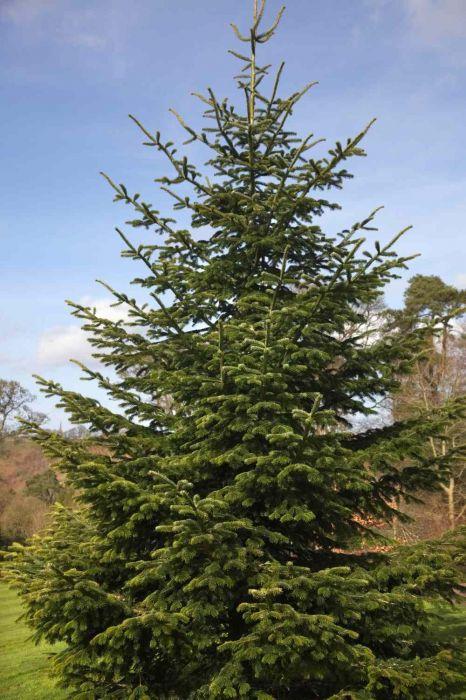 https://www.treecommerce.nl/messenger/photo.php?photo=51edef3b0e80b853183eafc1ddd8d9ae&tsd