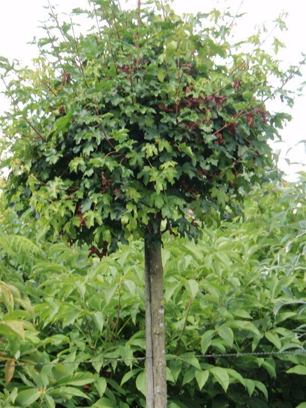 https://www.treecommerce.nl/messenger/photo.php?photo=58d863d6e368b21f6d1e129d37039e93&tsd