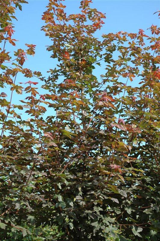 https://www.treecommerce.nl/messenger/photo.php?photo=620ade68488dbb18e3432466922b3513&tsd