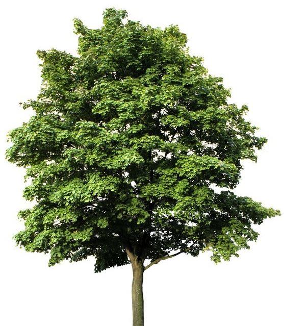 https://www.treecommerce.nl/messenger/photo.php?photo=6259025f00a2c29d6f5090752bb508a3&tsd
