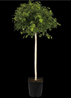 https://www.treecommerce.nl/messenger/photo.php?photo=73e39ba32f393dfd4555ff40b37ec34d&tsd