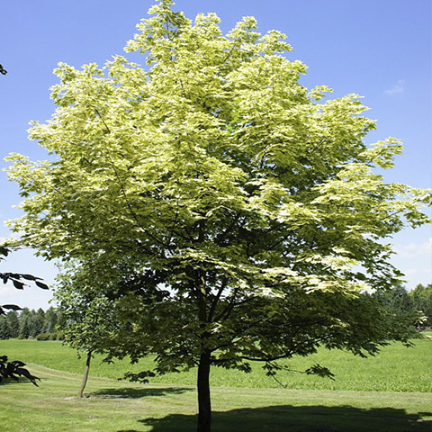 https://www.treecommerce.nl/messenger/photo.php?photo=7b959c8876f88e3c471bea41619e6176&tsd