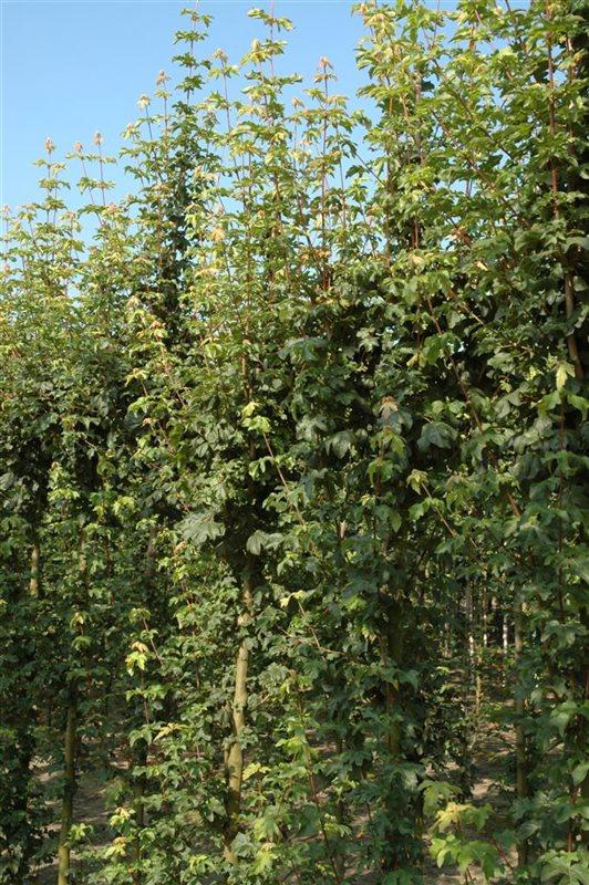 https://www.treecommerce.nl/messenger/photo.php?photo=7e8bb4769621fead046a7e620df3e950&tsd