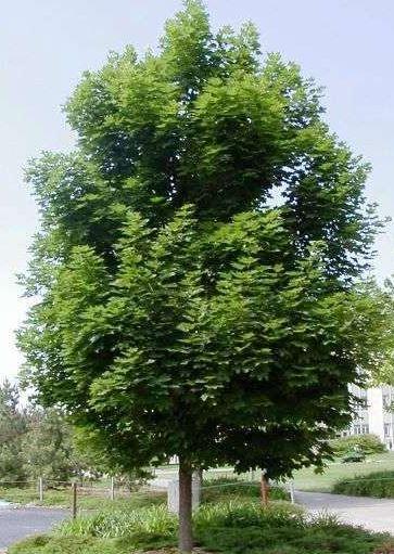 https://www.treecommerce.nl/messenger/photo.php?photo=7f60f736e312c71fdcf7632fb221caf3&tsd
