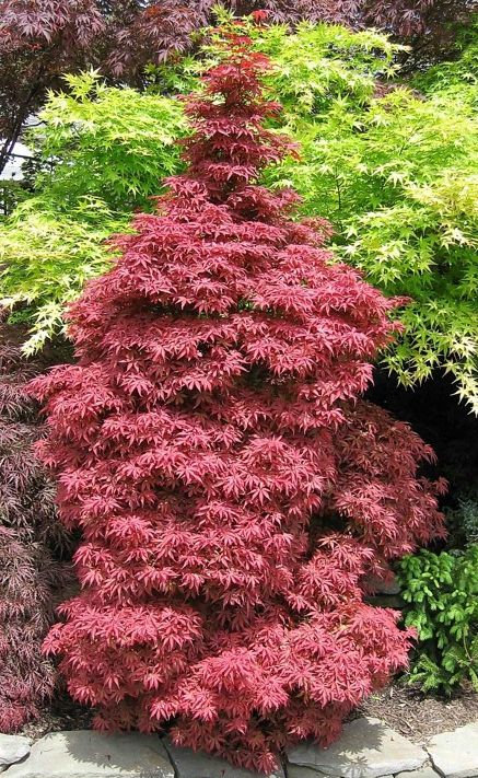 https://www.treecommerce.nl/messenger/photo.php?photo=82405c9ac745961728c12606be1445b4&tsd