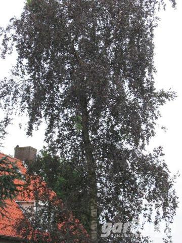 https://www.treecommerce.nl/messenger/photo.php?photo=8d5db5f9f8bebfd890e7995bede5a646&tsd