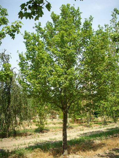 https://www.treecommerce.nl/messenger/photo.php?photo=91540fcbe12e7bd17fc3a3000196497c&tsd