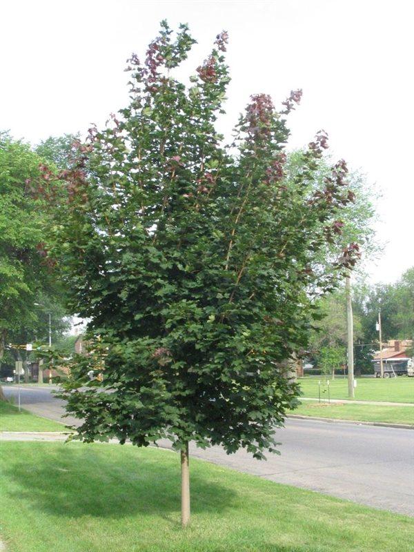https://www.treecommerce.nl/messenger/photo.php?photo=9329815338fa720757adc92ad6d4e873&tsd