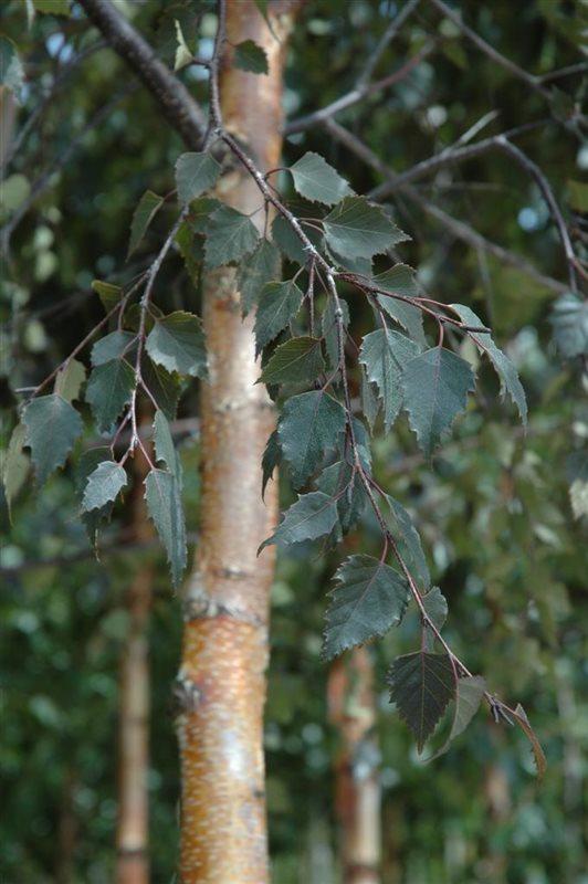 https://www.treecommerce.nl/messenger/photo.php?photo=97b6c5041e2219367774a19243cadb91&tsd