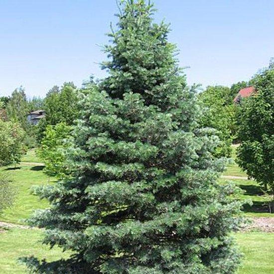 https://www.treecommerce.nl/messenger/photo.php?photo=a7a16d25b56d6292328d4b51f97899e9&tsd
