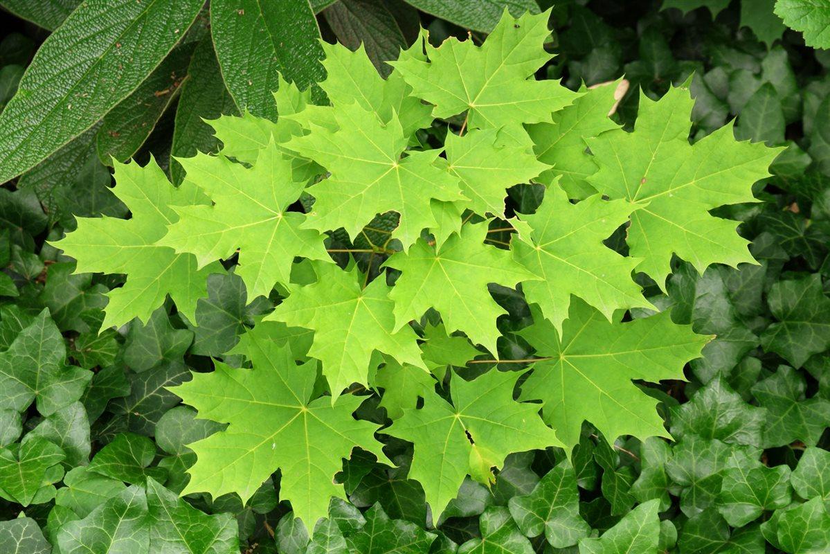 https://www.treecommerce.nl/messenger/photo.php?photo=a80b91e65456187b71b007748f64c357&tsd