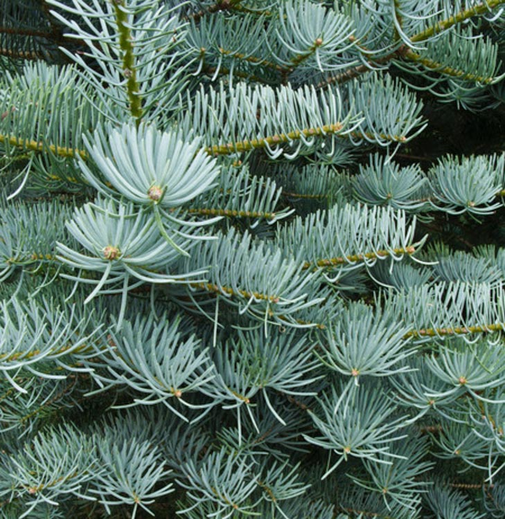 https://www.treecommerce.nl/messenger/photo.php?photo=b3372c3a108e118f89d1032792b79a38&tsd