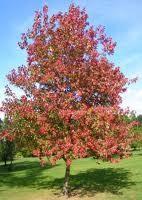 https://www.treecommerce.nl/messenger/photo.php?photo=b340f3113a479b4ee49a2859de0369bd&tsd