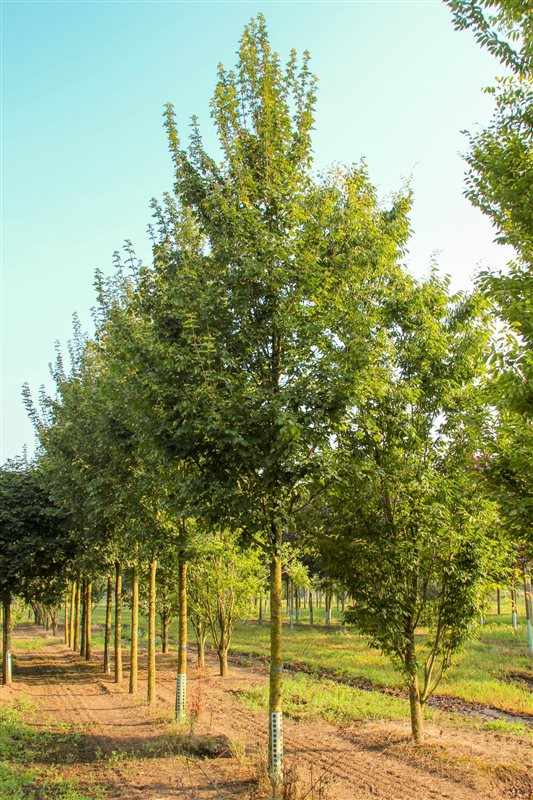 https://www.treecommerce.nl/messenger/photo.php?photo=b5c85bac04778ecab6362161b2417dc9&tsd