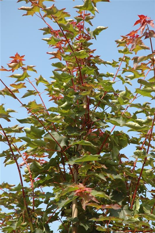 https://www.treecommerce.nl/messenger/photo.php?photo=c38a761ff7f872f7f303b3a9aa3ff7ff&tsd