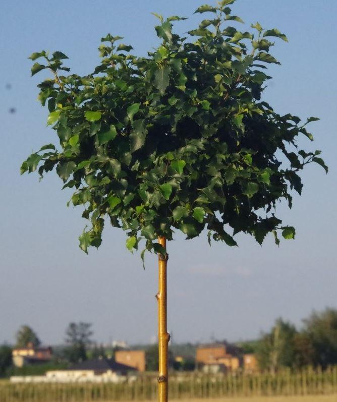 https://www.treecommerce.nl/messenger/photo.php?photo=c8928549e695c8a9ff8055984439c9af&tsd
