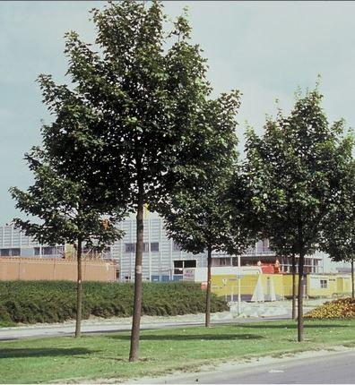 https://www.treecommerce.nl/messenger/photo.php?photo=cc864fd6605dad4c36b7acf6bfcfe9d1&tsd