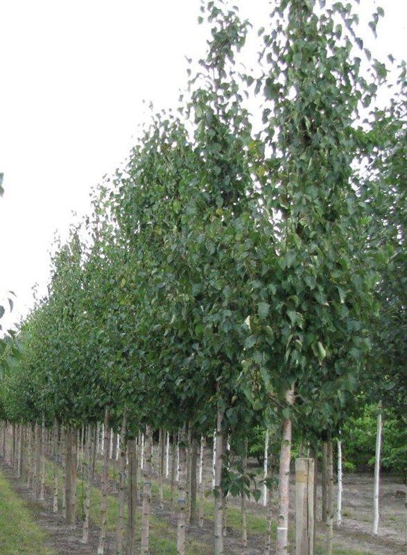 https://www.treecommerce.nl/messenger/photo.php?photo=ce7eaae36897553c39c080c980daaf46&tsd