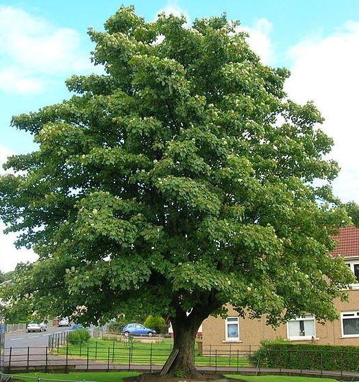 https://www.treecommerce.nl/messenger/photo.php?photo=d49ecfe8807bd3e5edeb0bd4252ececb&tsd