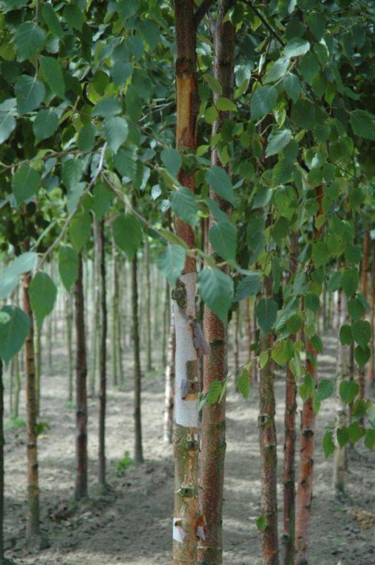 https://www.treecommerce.nl/messenger/photo.php?photo=d641844c04d3716c54bbc2ec81f40b30&tsd