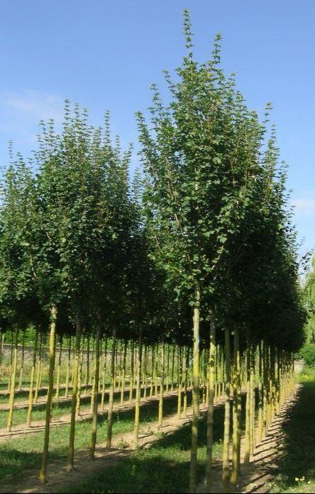 https://www.treecommerce.nl/messenger/photo.php?photo=d6b2bce834f8842b3a0e2a155f202908&tsd