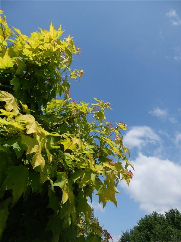 https://www.treecommerce.nl/messenger/photo.php?photo=e08b8842a83824f2db663a893d16056f&tsd
