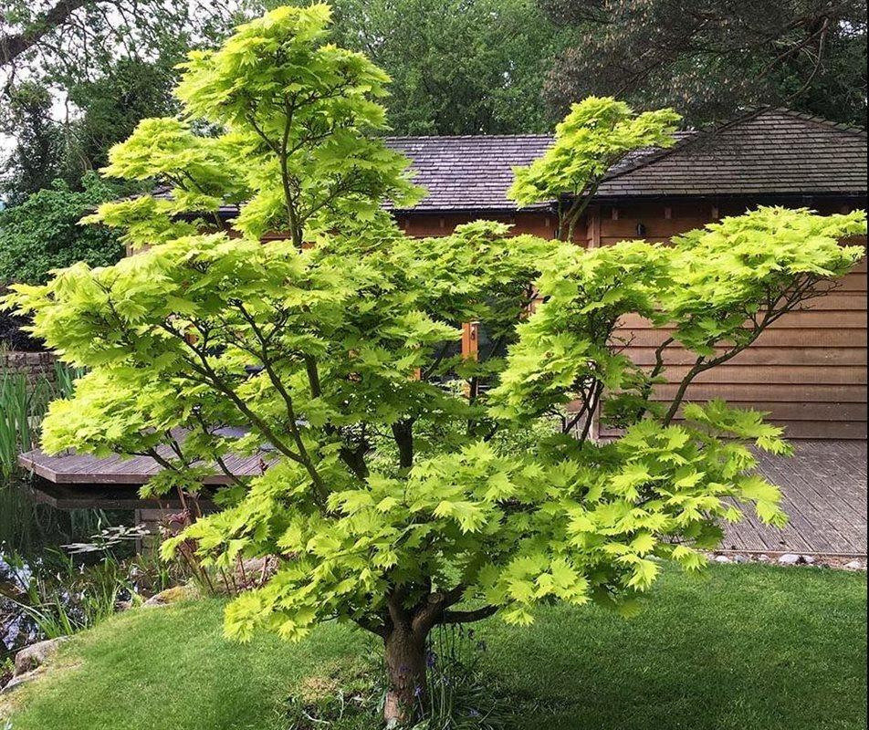 https://www.treecommerce.nl/messenger/photo.php?photo=e2141d8d01091c91ac45721d95f9b16e&tsd