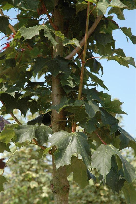 https://www.treecommerce.nl/messenger/photo.php?photo=e504504bf1aa160c3d044b6cae2907e9&tsd