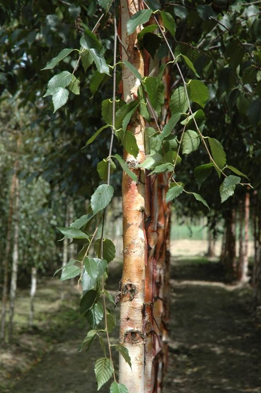 https://www.treecommerce.nl/messenger/photo.php?photo=e7fc12093a945d6e3ad0b9ce01276a37&tsd