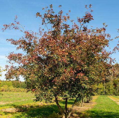 https://www.treecommerce.nl/messenger/photo.php?photo=e9ab6814d7c4a1e5ec42e6779fcb6dad&tsd