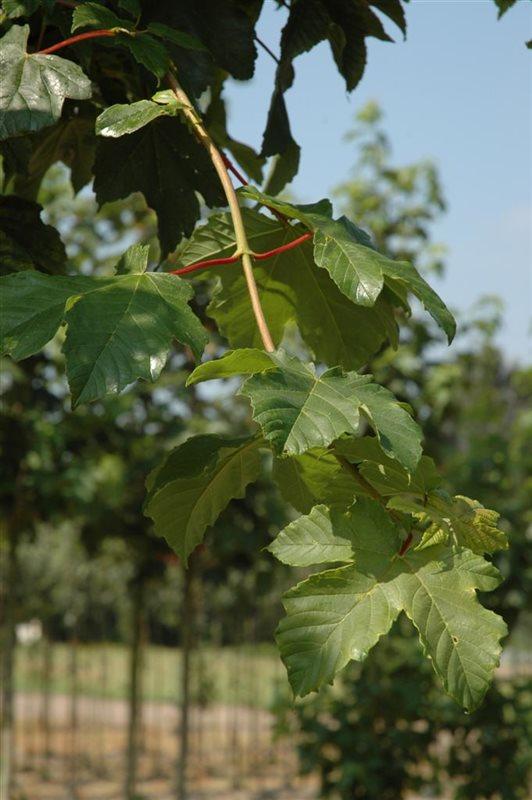 https://www.treecommerce.nl/messenger/photo.php?photo=ea6752043e75e80c51410786c5983c03&tsd