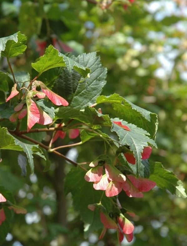 https://www.treecommerce.nl/messenger/photo.php?photo=f057b39d40baebef5db36c75fc110022&tsd