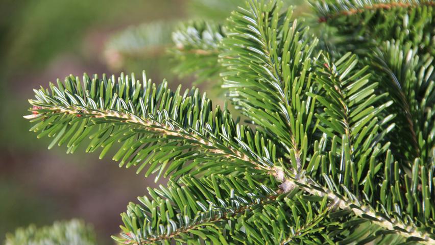 https://www.treecommerce.nl/messenger/photo.php?photo=f8b0acdaf7fd3b5c22301ff7b9e98d5d&tsd