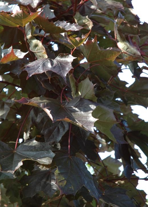 https://www.treecommerce.nl/messenger/photo.php?photo=fbf7c93b179e37abe6a34b94d606dcfe&tsd