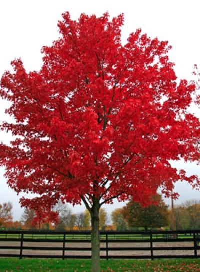 https://www.treecommerce.nl/messenger/photo.php?photo=fdb6aeaa56e16c8023e54507fc97c977&tsd